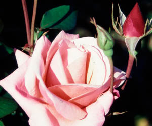 A rose by any other name might smell as sweet, but will it sell as many books?