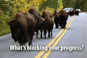 What's blocking your progress? A herd of buffalo blocks a roadway.